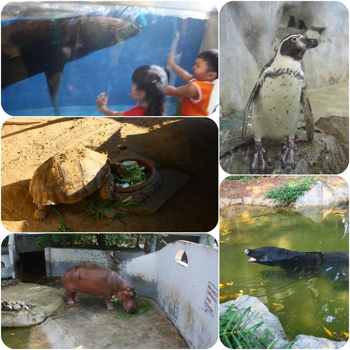 зоопарк в Бангкоке