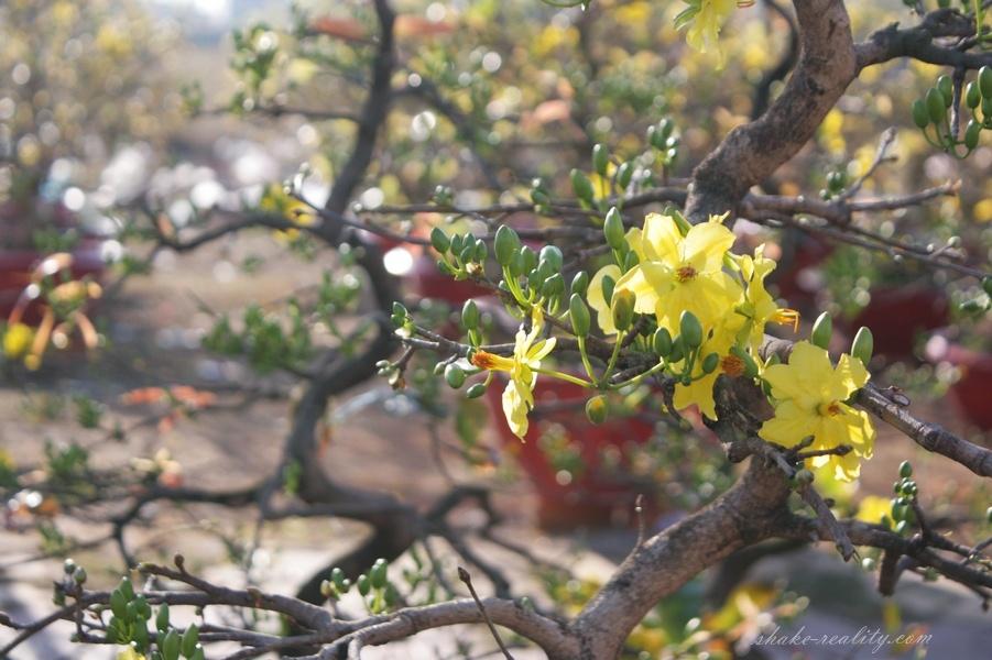 vietnam_new_yearIMG_0013.024
