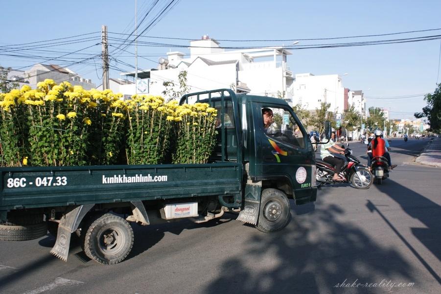 vietnamese new year flowers in Phanthiet