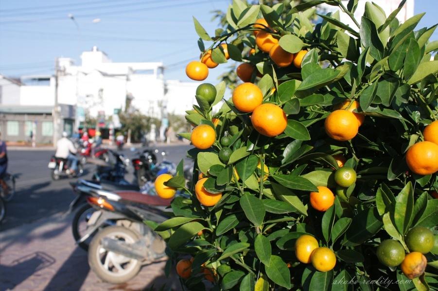 vietnam_new_yearIMG_0032.028