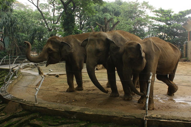 слоны в зоопарке хошимина, фотография